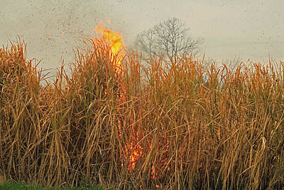 Photograph - Burning Standing Sugar Cane by Ronald Olivier
