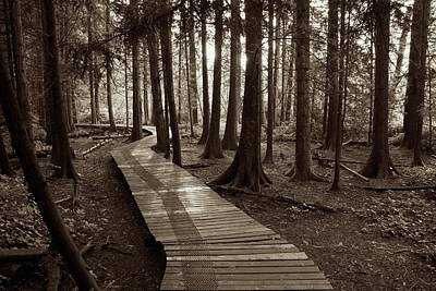 Photograph - Burns Bog Boardwalk In Black And White by Scott Holmes