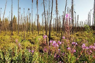 Destruction Photograph - Burnt Forest by Ashley Cooper
