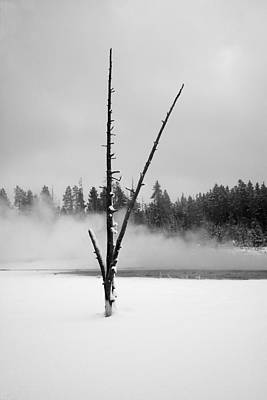 Photograph - Burnt Sentinal Yellowstone National Park by James Hammond