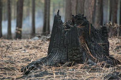 Destruction Photograph - Burnt Tree Trunk by Juli Scalzi