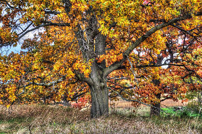 Photograph - Burr Oak I by Roger Passman