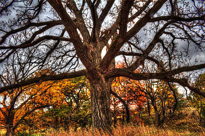 Photograph - Burr Oak II by Roger Passman