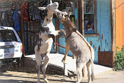 Burros Photograph - Burro Brawl In The Street by Donna Kennedy