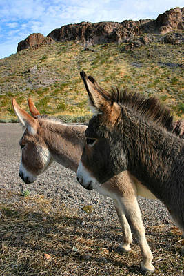 Photograph - Burros by Kristin Elmquist