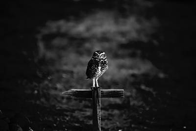 Burrowing Owl At Dusk Art Print by Kelly Gibson