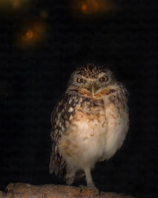 Photograph - Burrowing Owl by Deborah Smith