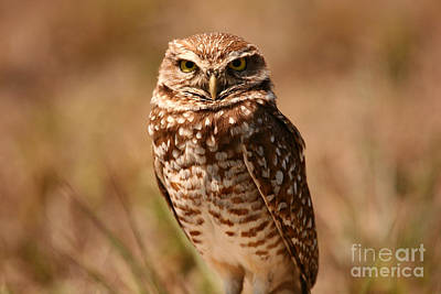 Art Print featuring the photograph Burrowing Owl Impressions by John F Tsumas