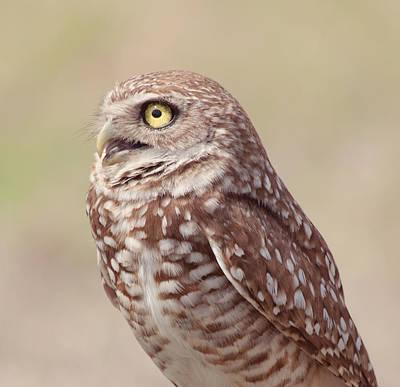 Kim Photograph - Burrowing Owl by Kim Hojnacki