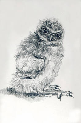 Burrowing Drawing - Burrowing Owl Nestlling by Pat Oldham