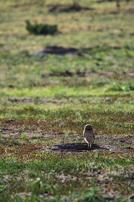 Photograph - Burrowing Owl On Guard by Nathan Hillis