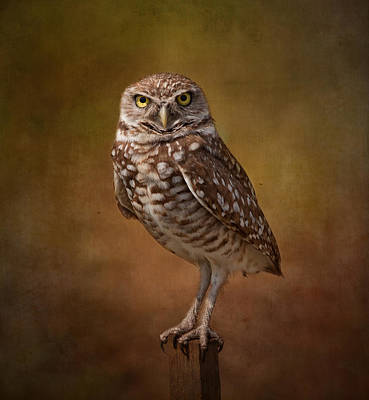 Burrowing Owl Portrait Art Print by Kim Hojnacki