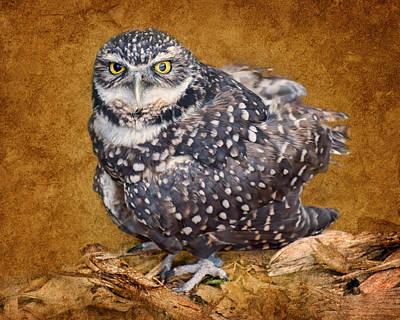 Burrowing Owl Portrait Art Print