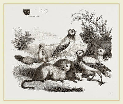Burrowing Drawing - Burrowing Owls And Prairie-dogs by Litz Collection