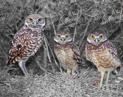 Photograph - Burrowing Owls  by Carol McCutcheon