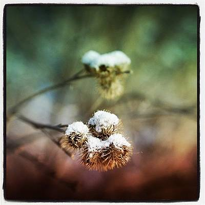 Brush Photograph - Burrs #snow #burr #bramble #brush by Sharon Wilkinson