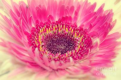 Photograph - Burst Of Beauty Dahlia  by Peggy Franz