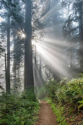 Photograph - Burst Of Light by Greg Nyquist