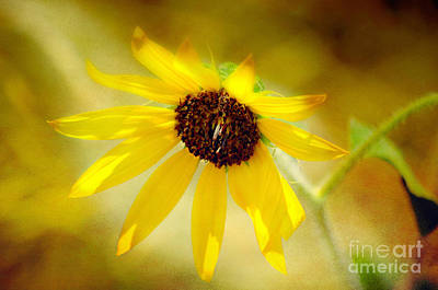 Photograph - Burst Of Sun Shine Wildflower by Peggy Franz