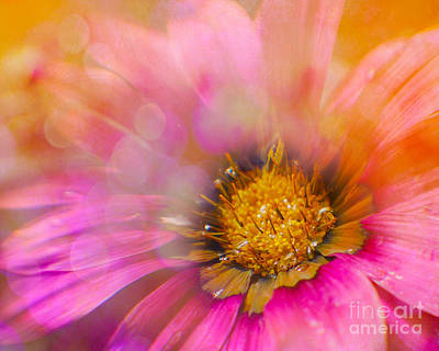 Photograph - Bursting by Judi Bagwell