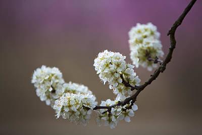 Photograph - Bursting Spring by Rich Berrett