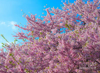 Photograph - Bursting With Blossoms With A Hint Of Green by Jeff at JSJ Photography