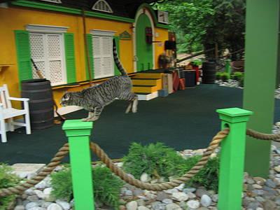 Busch Gardens - Animal Show - 121239 Art Print by DC Photographer