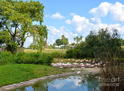 Photograph - Busch Gardens Savannah by Carol  Bradley
