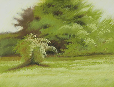 Pastel - Bush And Brush by Bruce Richardson