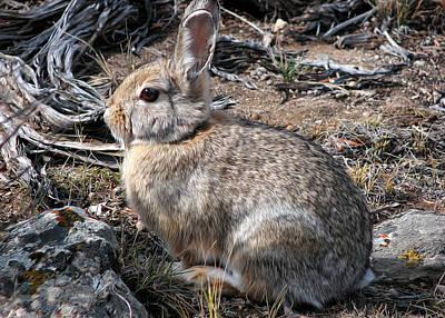 Photograph - Bush Bunny by Kathleen Bishop