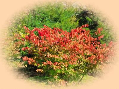 Photograph - Bush - Bush In Autumn/fall Caolours by Leif Sohlman