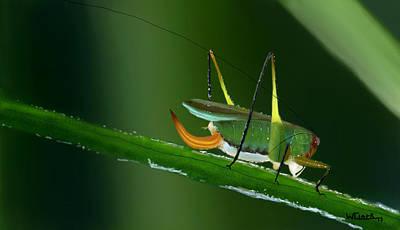 Digital Art - Bush Cricket by Wade Clark