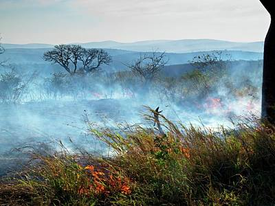 Bush Fire Art Print by Bildagentur-online/mcphoto-schaef