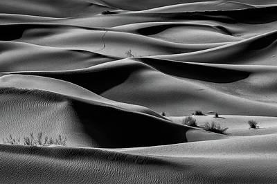 Bushes Photograph - Bush II by Mohammad Shefaa