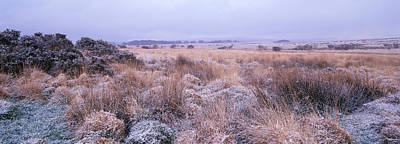 Dartmoor Photograph - Bushes On A Landscape, Dartmoor, Devon by Panoramic Images