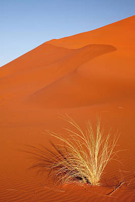 Bushman Photograph - Bushman's Grass And Reddish Sand Dune by Jaynes Gallery