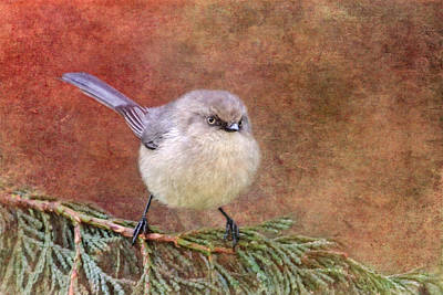 Tiny Bird Photograph - Bushtit by Angie Vogel