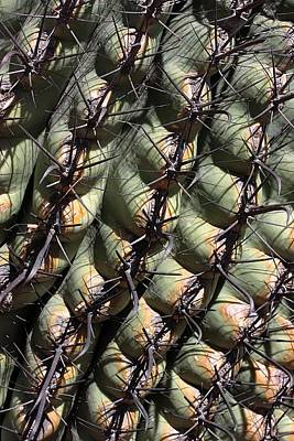 Photograph - Business End Of A Barrel Cactus by Joe Kozlowski