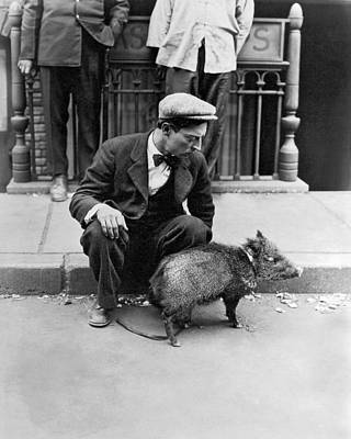 Photograph - Buster Keaton With A Peccary by Underwood Archives