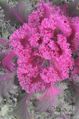 Photograph - Bursting In Pink by Frank Townsley