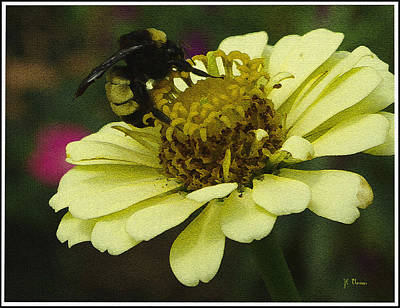 Photograph - Busy As A Bee  by James C Thomas