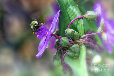 Photograph - Busy As A Bee by Mary Lou Chmura
