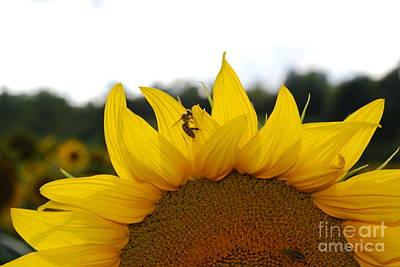 Photograph - Busy Bee by Ankya Klay