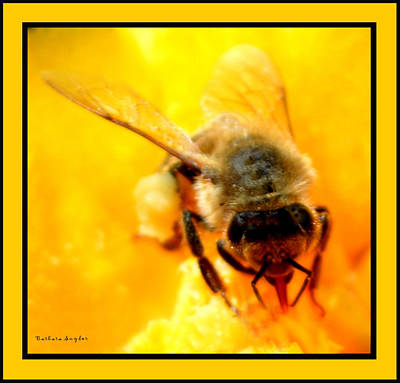 Cactus Flower Digital Art - Busy Bee by Barbara Snyder