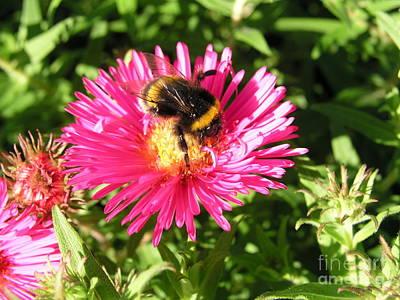 Busy Bee Art Print by Bev Conover