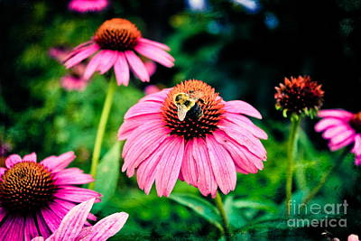 Photograph - Busy Bee by Colleen Kammerer