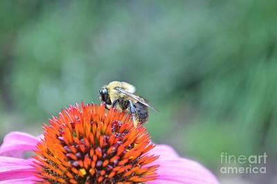 Jolly Old Saint Nick - Busy Bee by David Shedivy