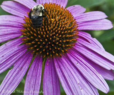 Busy Bee Art Print by Deborah Klubertanz