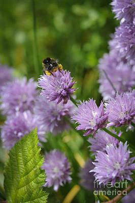 Bumble Digital Art - Busy Bee by Donald Davis