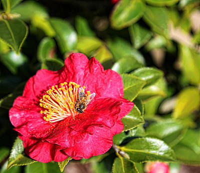 Busy Bee Art Print by Judy Vincent